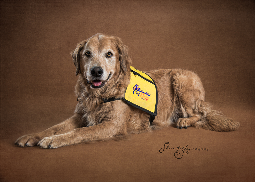 Therapy dog - golden