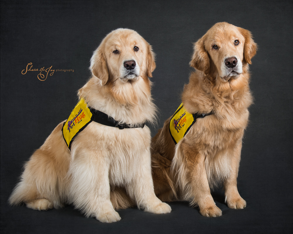 Therapy Dogs - goldens