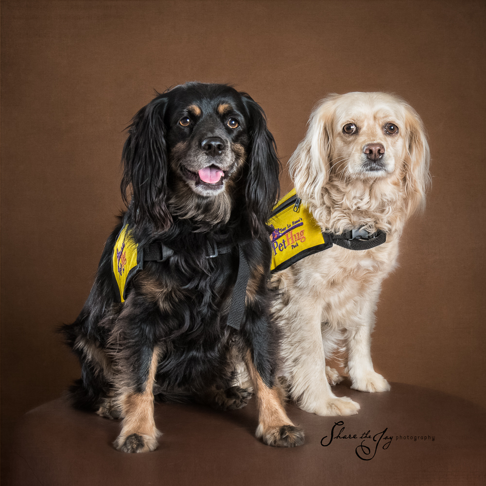 Therapy Pets - spaniels
