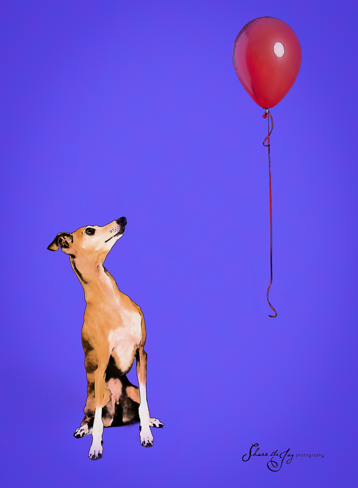 Dog and Red Balloon