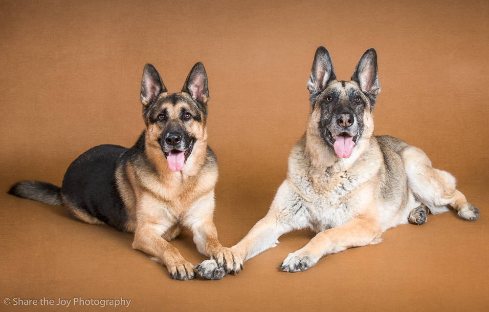 German Shepherd Best Friends